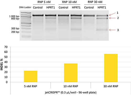 RNP transfection reagent – jetCRISPR™ | VWR